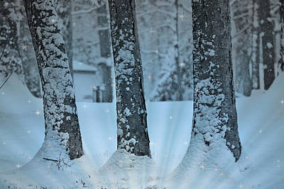 Snowstorm Mixed Media - Winter Miracle by Trish Tritz