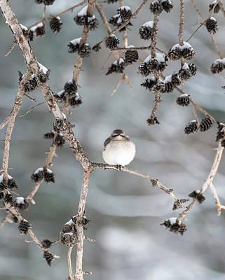 Winter Mockingbird Art Print