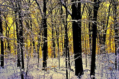 Photograph - Winter Mood Lighting by Frozen in Time Fine Art Photography
