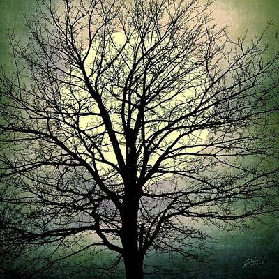 Photograph - Winter Moon Silhouette by Patricia Strand