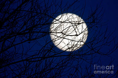 Photograph - Winter Moon by Terry Elniski