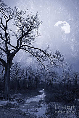 Photograph - Winter Moonlight Blues by John Stephens