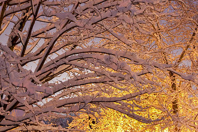 Photograph - Winter Morning by Carol Erikson