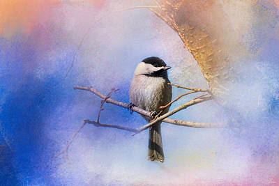 Chickadee Photograph - Winter Morning Chickadee by Jai Johnson