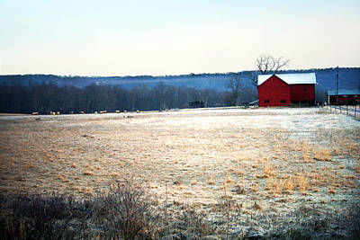 Winter Morning  Art Print by Meaghan Troup