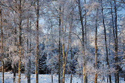 Winter Nature Ans Scenery Art Print by Christian Lagereek