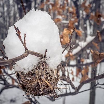 Photograph - Winter Nest by Chris Bordeleau
