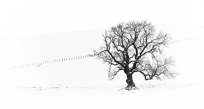 Winter Oak Tree Art Print by Tim Gainey