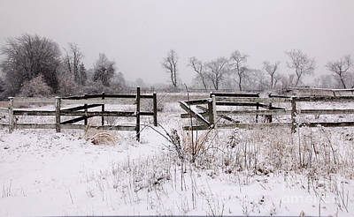 Photograph - Winter Paddock by Butch Lombardi