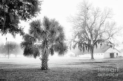 Photograph - Winter Palmetto by Scott Hansen