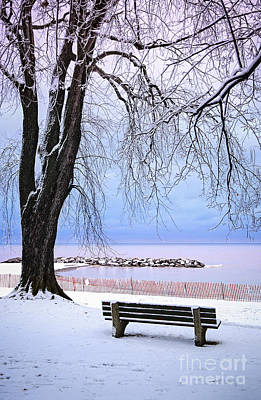 Snowed Trees Photograph - Winter Park In Toronto by Elena Elisseeva