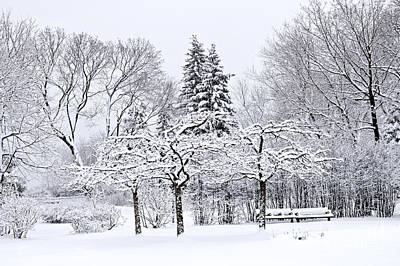 Winter Landscapes Photograph - Winter Park Landscape by Elena Elisseeva