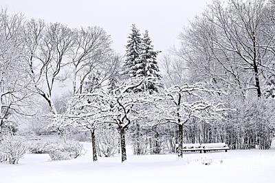 Winter Park Landscape Print by Elena Elisseeva