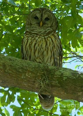 Winter Park Owl Art Print by Adam Jewell