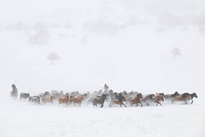 Running Horses Photograph - Winter Pastures by Tony Xu