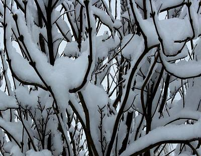 Photograph - Winter Pattern 1 by Debbie Finley