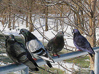 Photograph - Winter Pigeon Party by Nina Silver