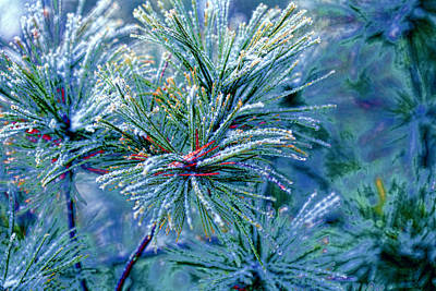 Pine Needle Digital Art - Winter Pine by Bonnie Bruno