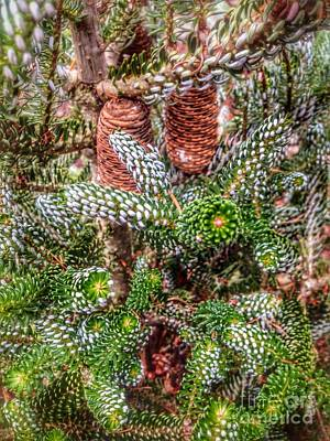 Photograph - Winter Pine   by Susan Garren