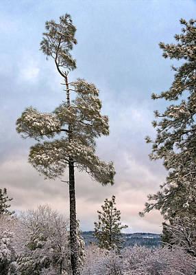 Digital Art - Winter Pines by Kathleen Bishop