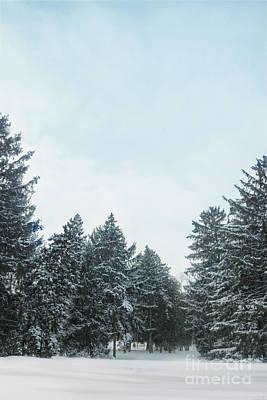 Winter Pines Original by Margie Hurwich