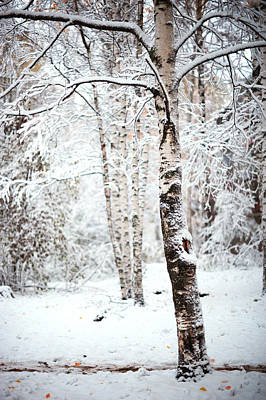 Photograph - Winter Poetry by Jenny Rainbow