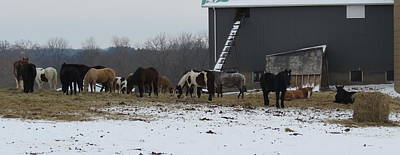 Photograph - Winter Ponies by Kay Novy