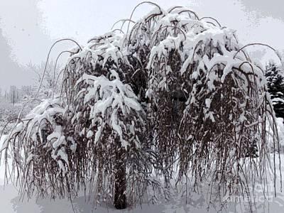 Winter Wonderland Mono Photograph - Winter Portrait by Donna McLarty