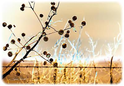 Photograph - Winter Prairie by Sylvia Thornton