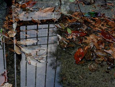 Photograph - Winter Puddle by Maria  Disley