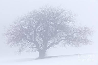 Photograph - Winter Quiet by Alan L Graham