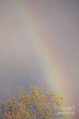 Photograph - Winter Rainbow by John  Mitchell