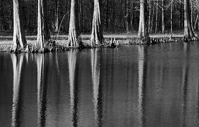 Photograph - Winter Reflections - Cypress Tree Art Print by Jane Eleanor Nicholas