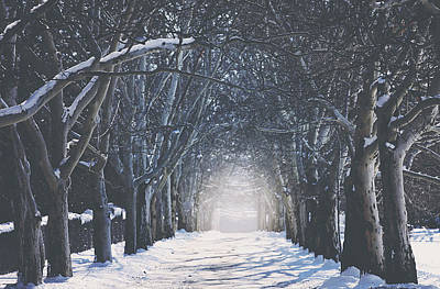 Tree-lined Photograph - Winter Road by Carrie Ann Grippo-Pike