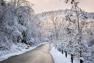 Downhill Photograph - Winter Road In Snowy Forest by Elena Elisseeva