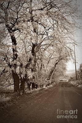 Photograph - Winter Road Sepia by Chalet Roome-Rigdon