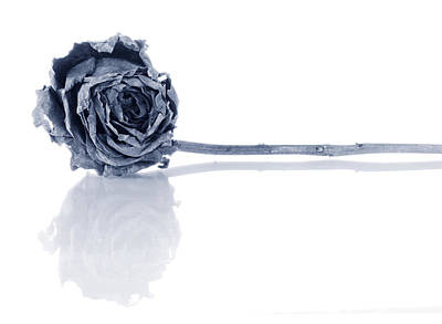 Sadness Photograph - Winter Rose by Jim Hughes