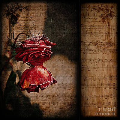 Photograph - Winter Roses by Liz  Alderdice