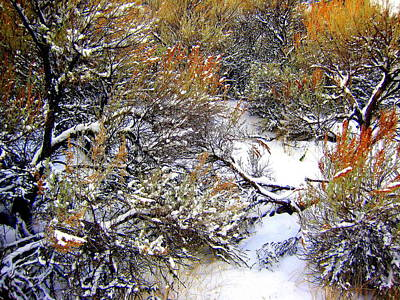 Winter Sage Art Print by Kathy Bassett