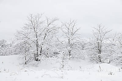 Photograph - Winter Scene by Larry Ricker