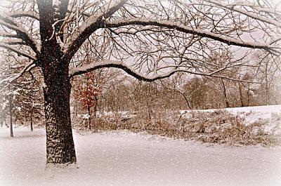 Winter Scene Art Print by Marty Koch