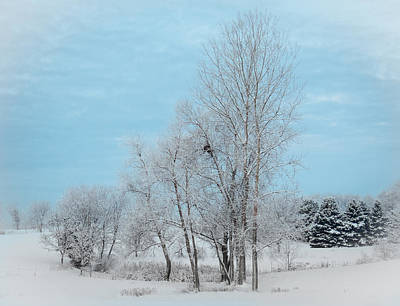 Photograph - Winter Scene With Nest by Patti Deters