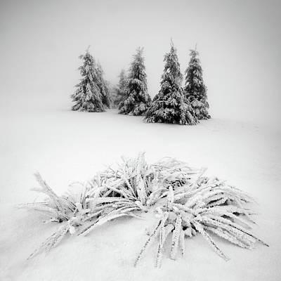 Frost Photograph - Winter Scenery by Daniel ?e?icha