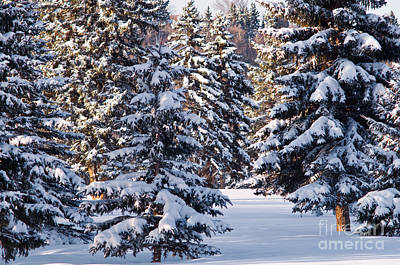 Photograph - Winter Scenic 12 by Terry Elniski