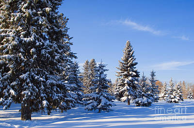 Photograph - Winter Scenic 15 by Terry Elniski
