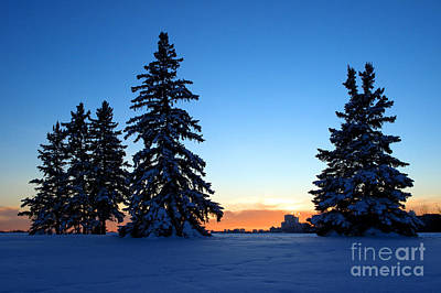 Photograph - Winter Scenic At Sunset by Terry Elniski