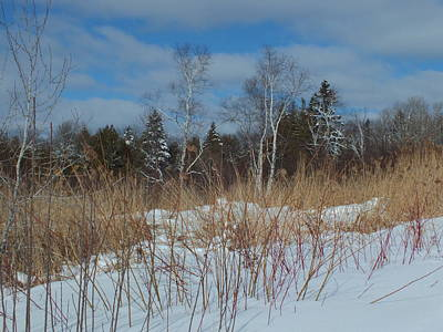 Photograph - Winter Scenic by Gene Cyr