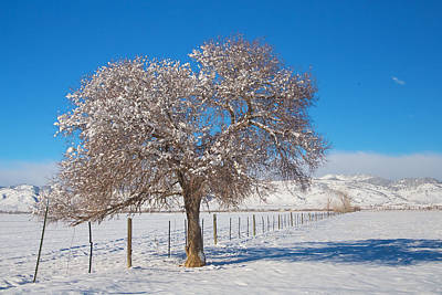 Photograph - Winter Season On The Range Snow And Blue Sky by James BO Insogna