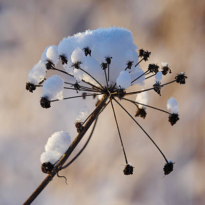Impressionist Landscapes - Winter seeds by Jouko Lehto