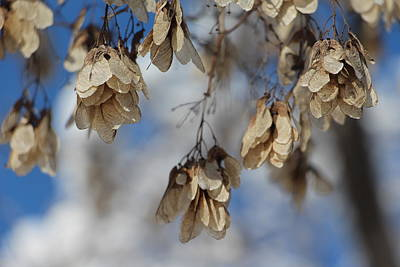 Photograph - Winter Seeds by Kathy M Krause
